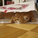 留守中の猫が気になる!ペットの様子を監視する
